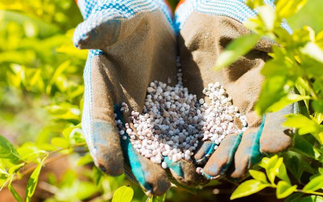 jardinage-mains-gants-engrais-main.JPEG