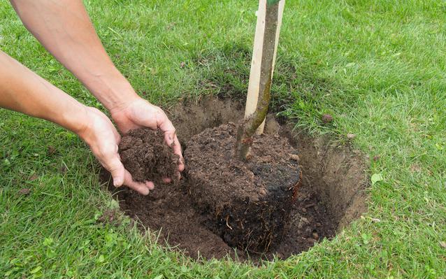 planter-son-verger-main.JPEG