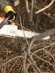 Bucheron pour couper les arbres ooreka for Reglementation elagage des arbres