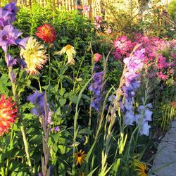Jardinage vos astuces sur page 6 - Plante de bordure ...