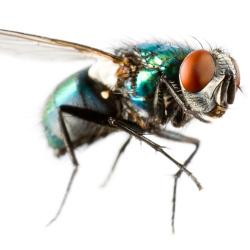 Enlever une tache d'excréments de mouche