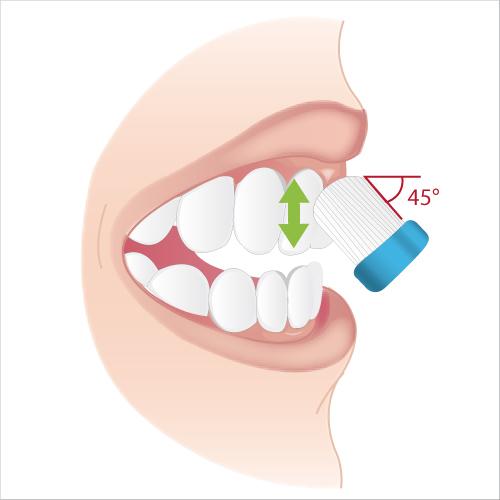 Se brosser les dents efficacement