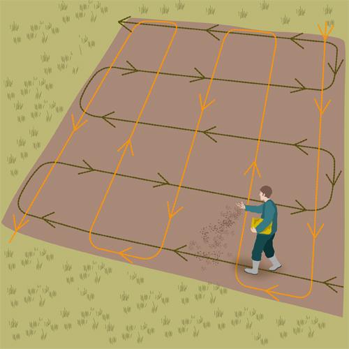 Planter de la pelouse
