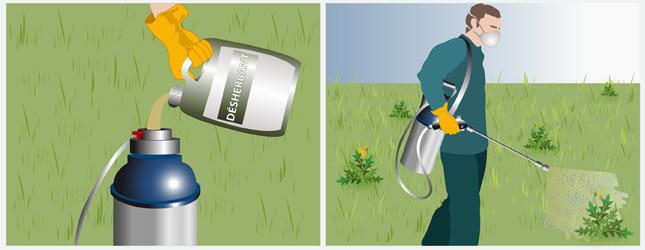 D sherber une pelouse ooreka - Desherbant selectif gazon efficace ...