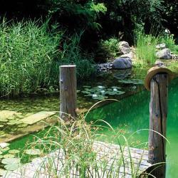 Entretenir une piscine naturelle