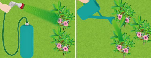 Faire et utiliser un purin d orties engrais - Comment utiliser le purin d ortie ...