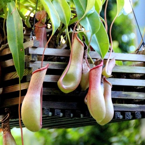 plante carnivore salle de bain