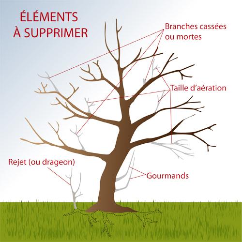 Élaguer un arbre
