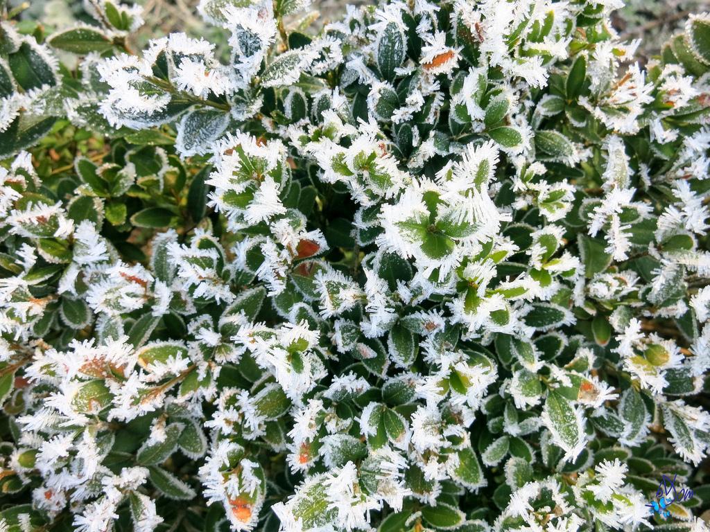 Que planter janvier Jardinage en janvier