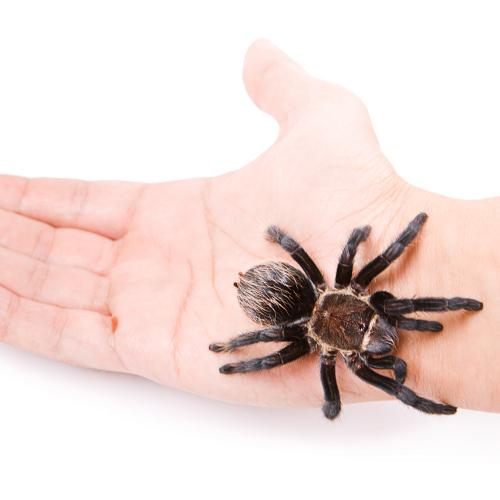 Que faire en cas de morsure d'araignée