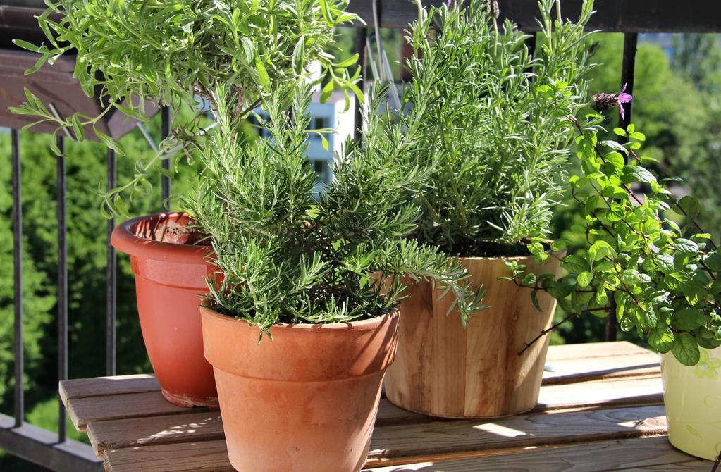 Plante aromatique balcon : liste - Ooreka
