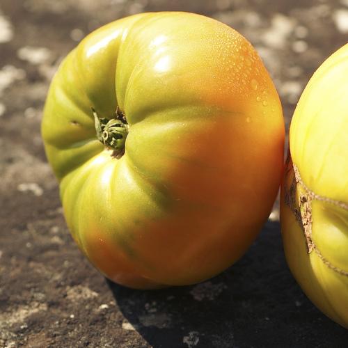 Vari t s de tomates liste ooreka - Tomate est un fruit ...