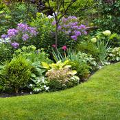 Questions à se poser avant de faire un massif de plantes - Jardinage