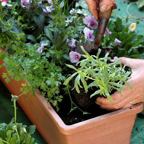 Faire Une Jardiniere Jardinage