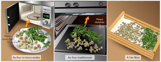 Faites sécher les plantes à tisanes