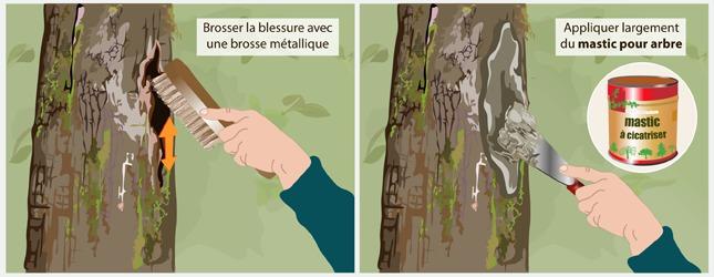 Soigner un arbre creux ou un arbre bless ooreka - Comment faire crever un arbre sans le couper ...