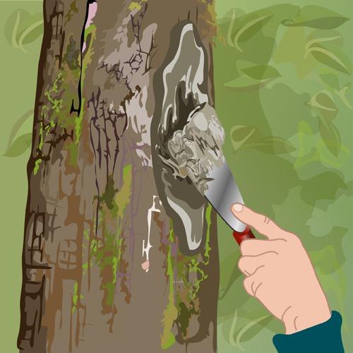 Soigner un arbre creux ou un arbre blessé
