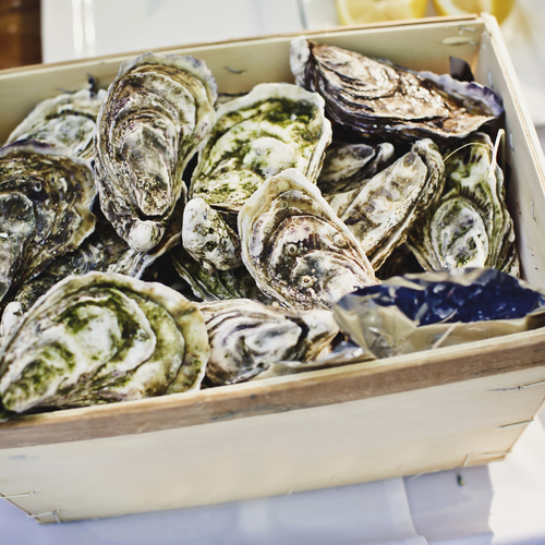 Conserver les huîtres