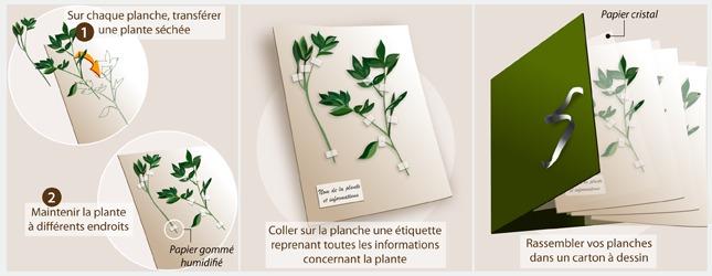 Mettez les plantes séchées en planches