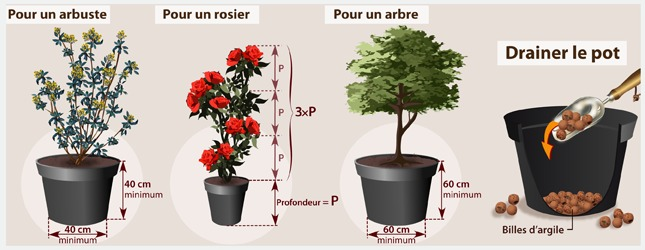 Planter un arbuste ou un arbre en pot verger for Arbustes persistants pour balcon
