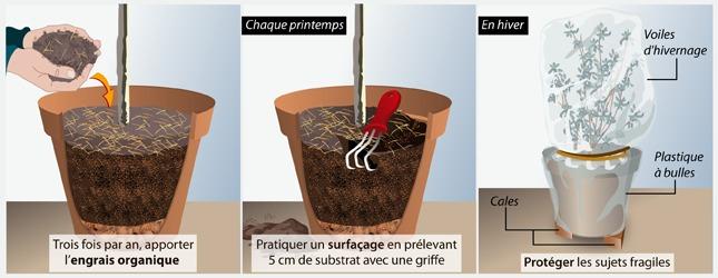 planter un arbuste ou un arbre en pot verger. Black Bedroom Furniture Sets. Home Design Ideas