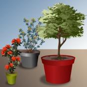 planter un arbre en pot