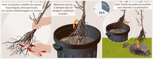 Praliner les racines des arbres et arbustes ooreka - Arbre sans racine envahissante ...
