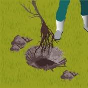 Praliner les racines des arbres et arbustes