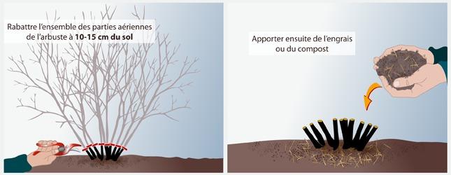 Rec per un arbre ou un arbuste verger - Quand tailler un noisetier ...
