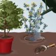 Comment cr er un jardin sans entretien for Planter un amaryllis en pleine terre
