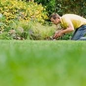 Tuer les mauvaises herbes naturellement jardinage - Tuer les mauvaises herbes javel ...