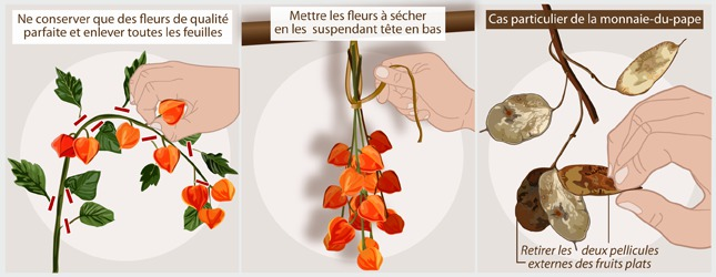 Cultiver Des Plantes Pour Bouquets De Fleurs Sechees Jardinage