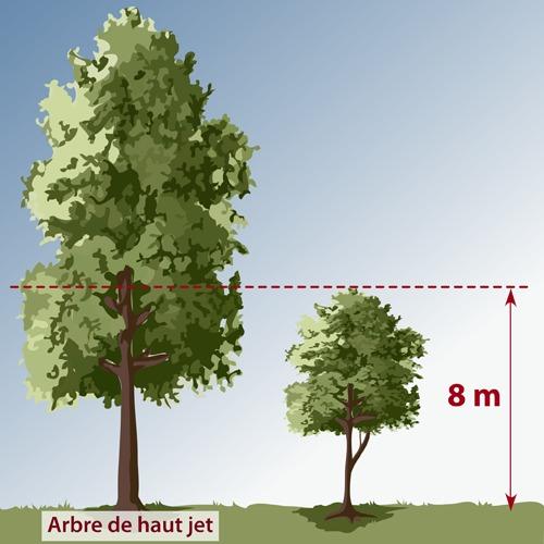 Choisir un arbre am nagement de jardin for Arbre persistant pour petit jardin