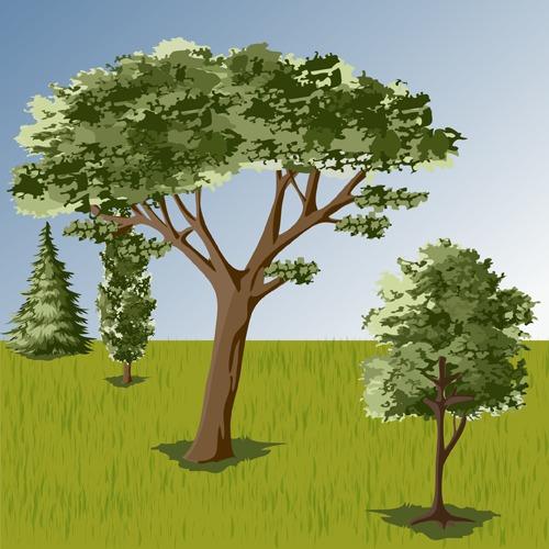 Choisir et planter des arbres d'ornement