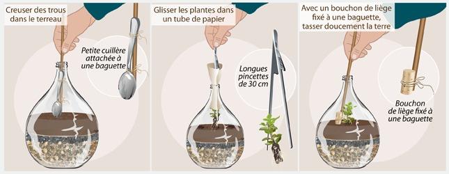 Cr er un jardin en bouteille jardinage - Quelle plante dans une jarre ...