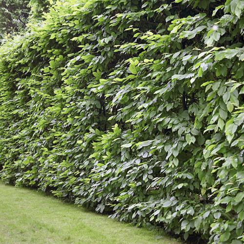 Protéger son jardin du vent - Aménagement de jardin