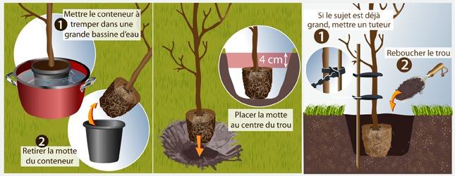 Cas n° 3 : Plantez un arbre en conteneur