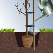 Comment planter un arbre d'ornement