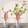 patate douce planter et cultiver ooreka. Black Bedroom Furniture Sets. Home Design Ideas
