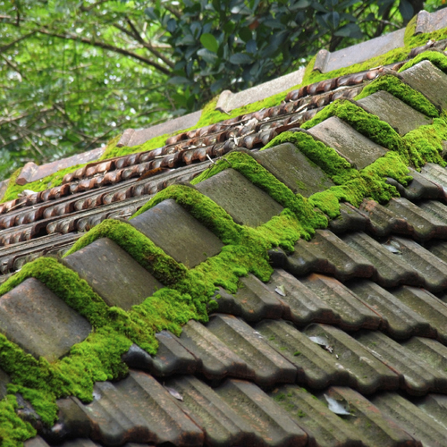 Démousser un toit