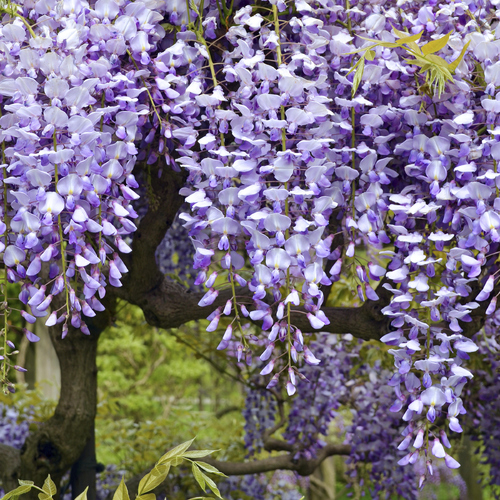 Créer un jardin parfumé