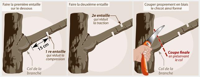Comment couper les branches - Comment couper une courgette ...