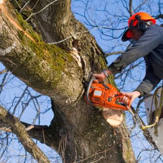 Couper une branche
