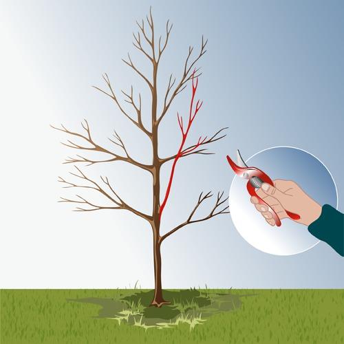 Réaliser une taille de formation des arbres