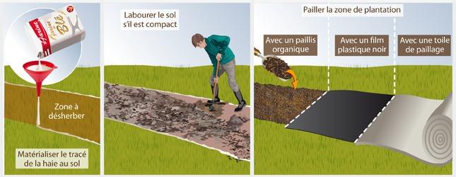 Comment planter une haie bocag re - Haie champetre persistant ...