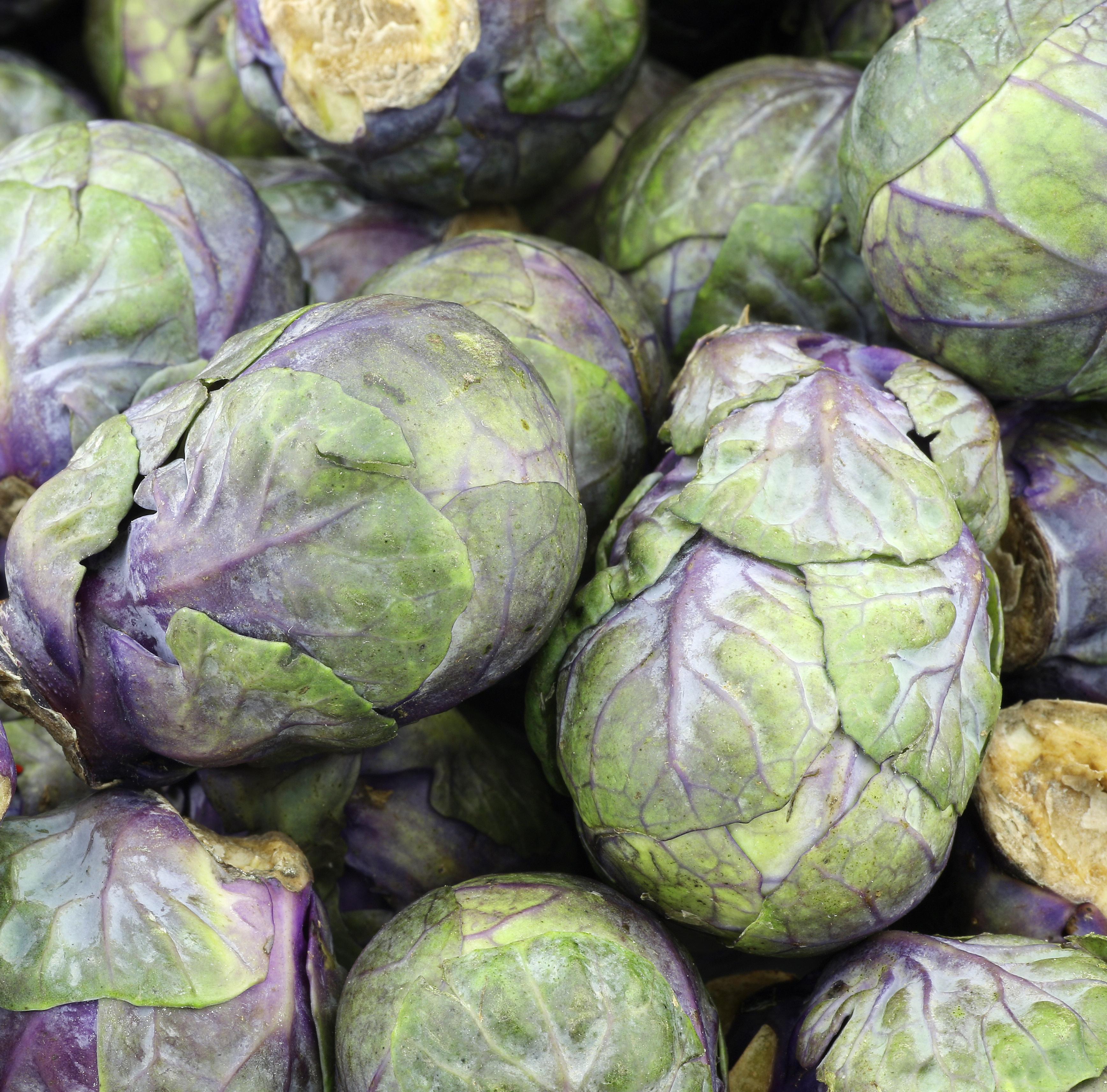 Les l gumes violets ooreka - Choux de bruxelles plantation ...
