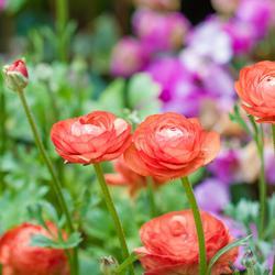 Jardinage vos astuces sur page 5 - Plantes vivaces fleuries ...