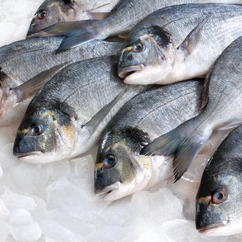 Conserver le poisson
