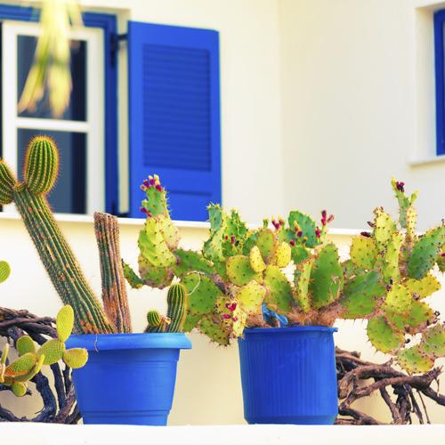 arroser un cactus ooreka. Black Bedroom Furniture Sets. Home Design Ideas