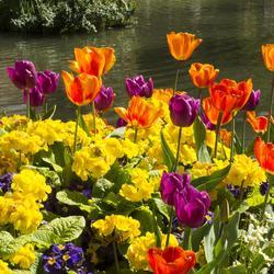 Comment cultiver des fleurs sur un muret - Comment se debarrasser du lierre sur un mur ...